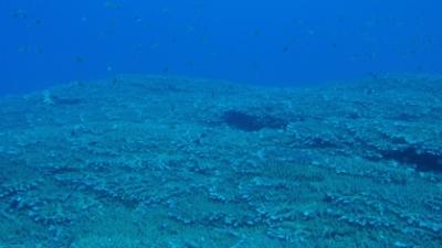 100920-05 ミドリイシサンゴ