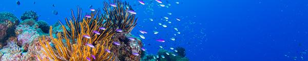 沖永良部島でダイビングしよう