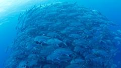 沖永良部島でダイビングで撮影できるフォト