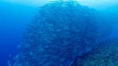 沖永良部島ダイビング季節