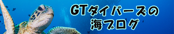 GTダイバーズ沖永良部島のダイビング・ブログ