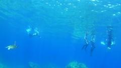 沖永良部でウミガメ