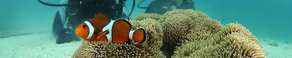 沖永良部島で体験ダイビング