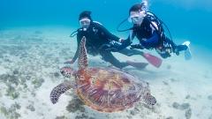 沖永良部島の体験ダイビングイメージ