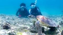 沖永良部島でダイビングの体験ダイビング
