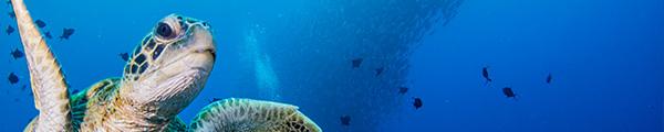 沖永良部島のダイビングフォトコンテスト