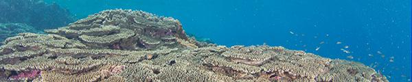 沖永良部島の観光情報