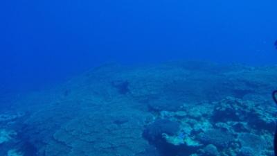 20100816-01サンゴの群生