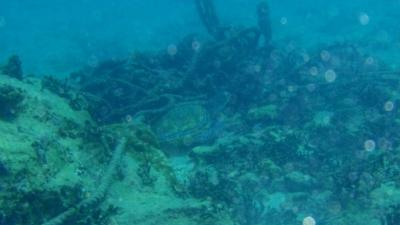 20100828-03アオウミガメ
