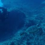 取材&ファンダイビング&サンゴの勉強会