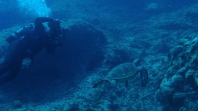 20100917-01アオウミガメの取材