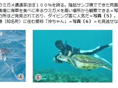 20101211-01アオウミガメの沖ちゃん