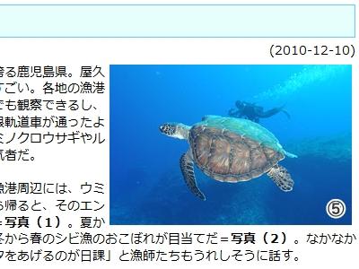 20101211-02夏祭りのアオウミガメ
