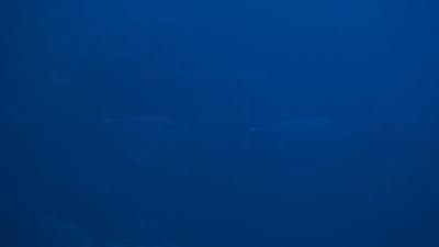 20101230-03 イソマグロ