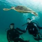 沖永良部はウミガメの楽園