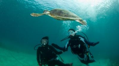 20110523-03アオウミガメの沖ちゃん