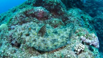 20110523-05モンダルマガレイ