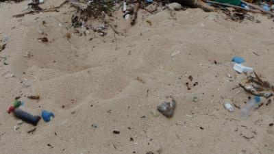 20110603-02ウミガメの足跡