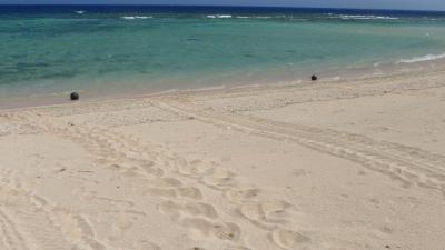 20110607-06アカウミガメとアカウミガメの足跡比較