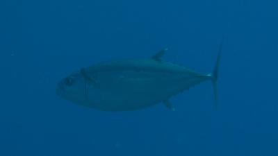 20110703-06イソマグロ