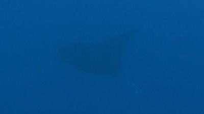 20110707-02オニイトマキエイ