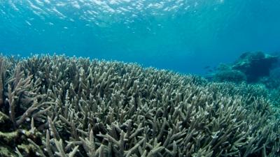 20110719-02枝サンゴの群生