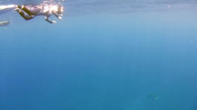 20110725-03アオウミガメ
