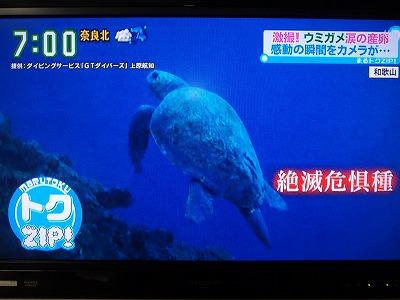 P7100111アカウミガメ