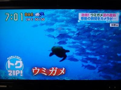 P7100113アオウミガメとギンガメ