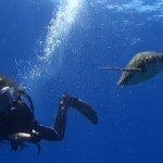 ウミガメと究極のふれあい・・