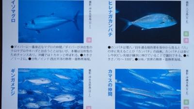 20110817-02日本の生み出会える!お魚
