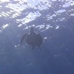 チョウチョウウオの幼魚たち