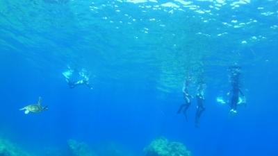 20110822-02ウミガメ探索スノーケリング