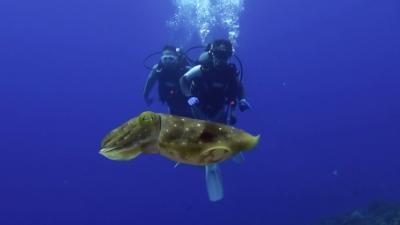 20110928-02コブシメとダイバー