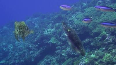 20110928-03コブシメのペアー