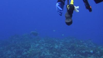 20110928-05ウミガメとダイバー
