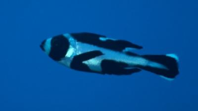 20111007-10マダラタルミyg