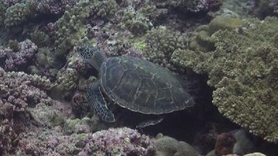 20111007-11アオウミガメ