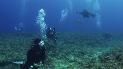 20111030-04アオウミガメとダイバー
