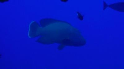 20111105-05メガネモチノウオ