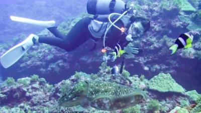 20111110-05コブシメとダイバー