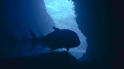 20111213-03ロウニンアジ