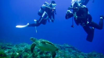 20111215-05アオウミガメ