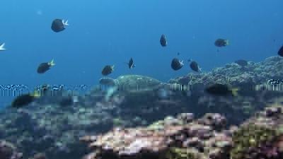 20111227-02アオウミガメ