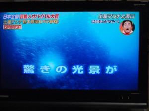 いきなり!黄金伝説 sp 沖永良部島 8