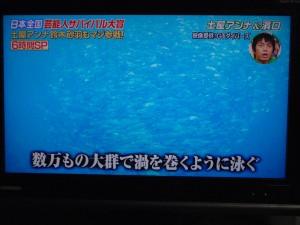 いきなり!黄金伝説 sp 沖永良部島 6