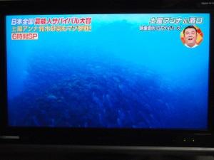 いきなり!黄金伝説 sp 沖永良部島 5