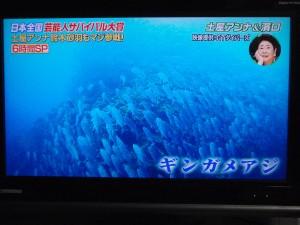 いきなり!黄金伝説 sp 沖永良部島 4