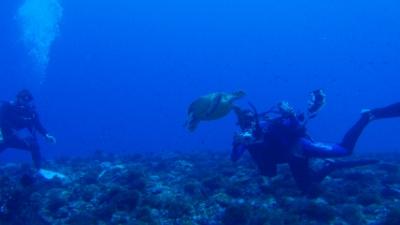 20110101-01アオウミガメ