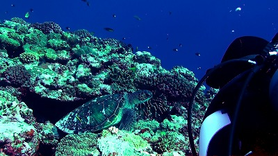 20110105113313(1)アオウミガメ